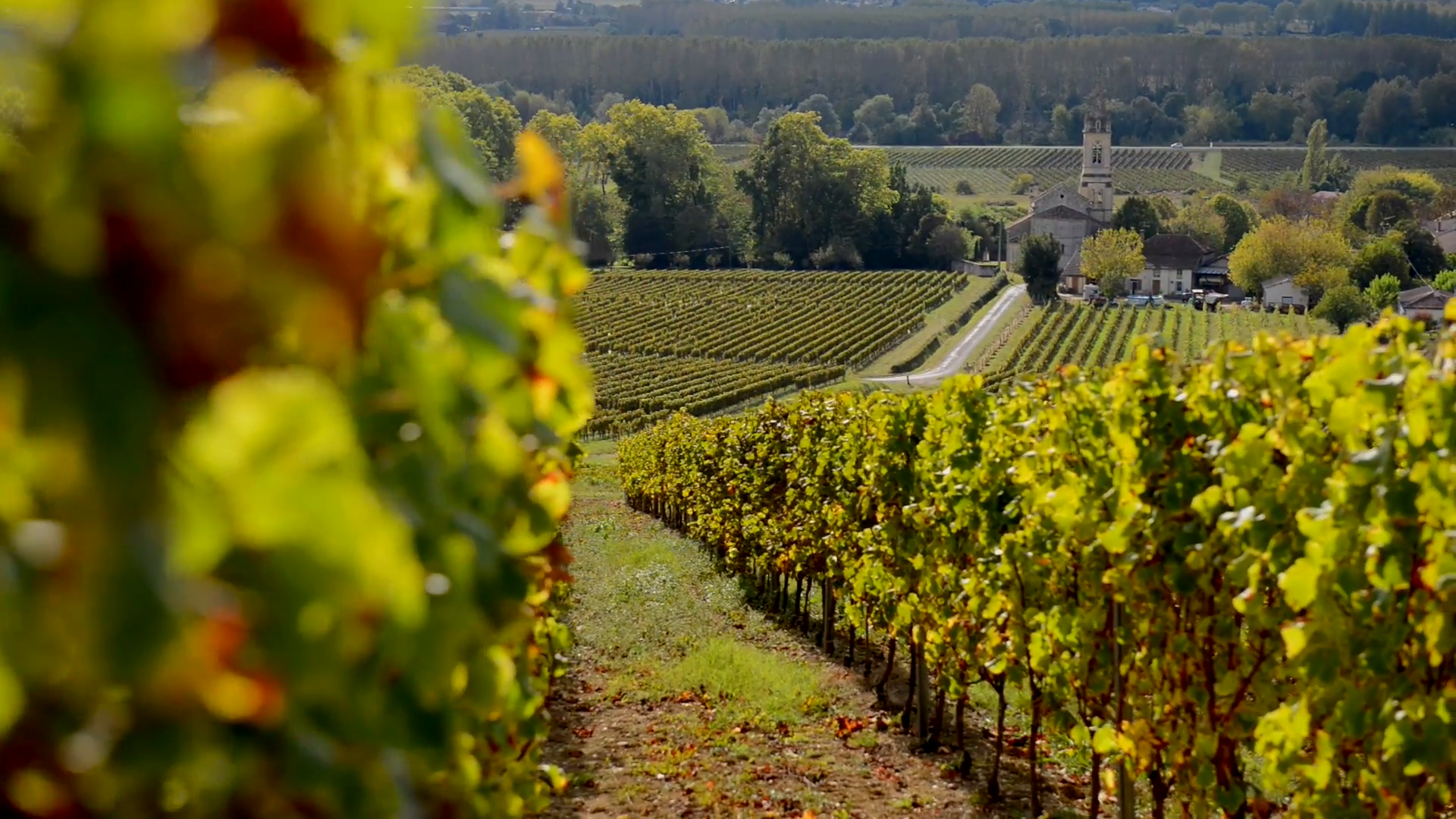 bordeaux-vineyard-in-autumn_7k4ipwwu__F0000